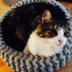 (Gallery)cat basket